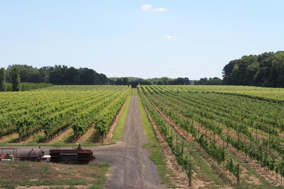 vintage wine tours at a field of crops